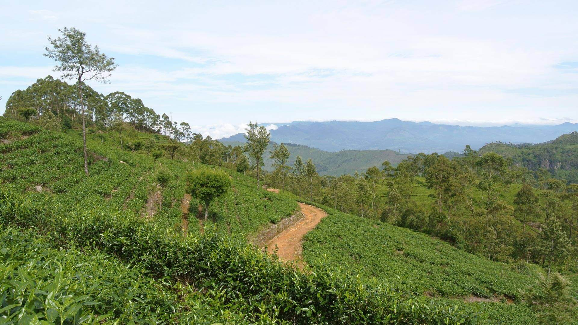The Golden Crown Hotel - Giragama Tea Plantation