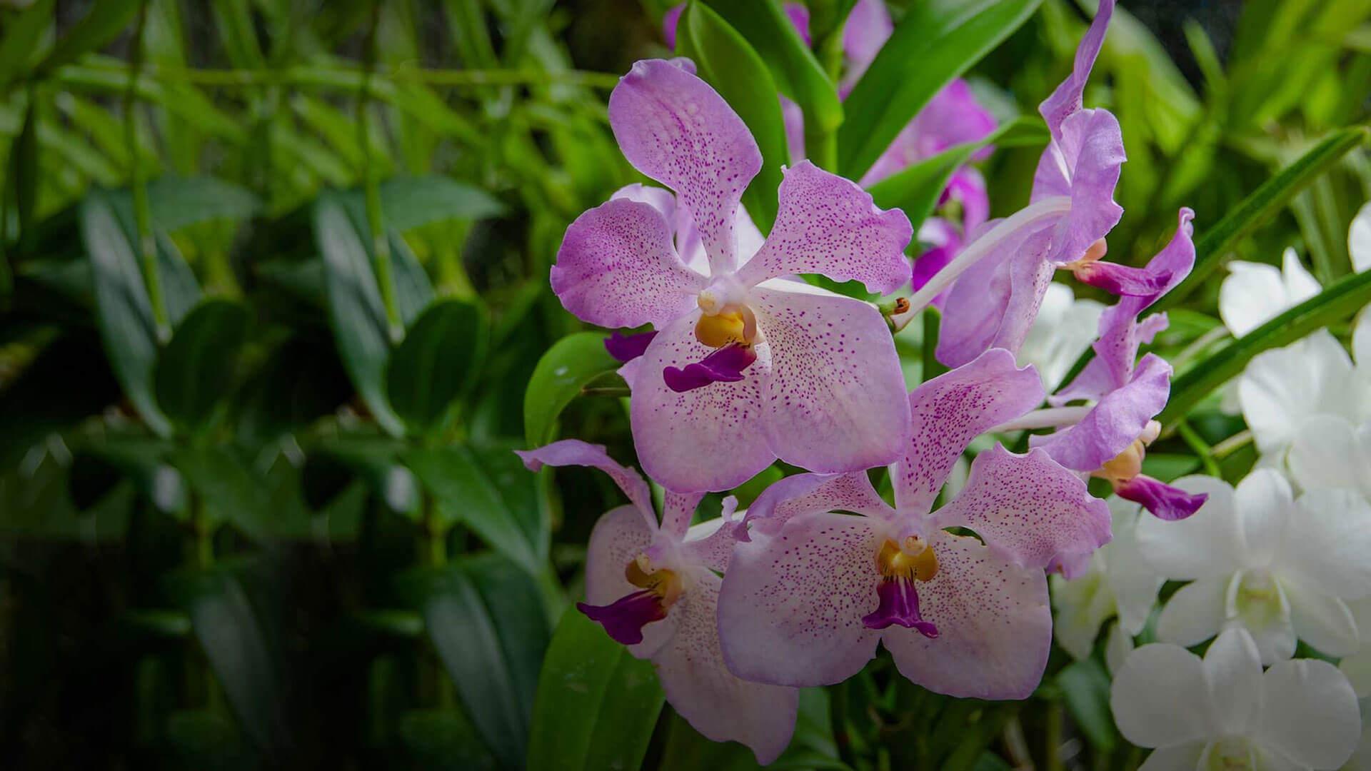 The Golden Crown Hotel - Peradeniya Royal Botanical Garden