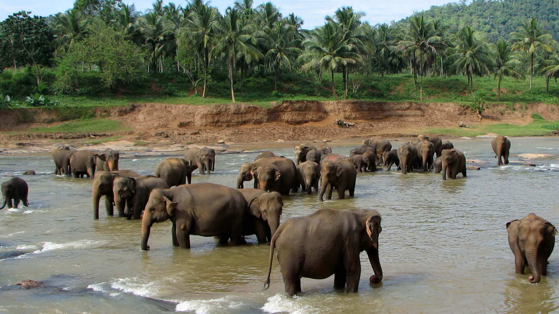 The Golden Crown Hotel - Pinnawala Elephant Orphanage